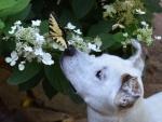 DOG_5505