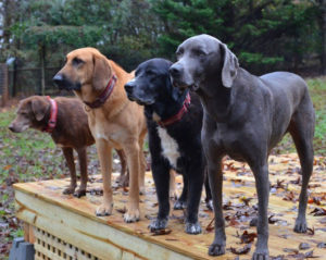 Photo (Left to Right) Ava, Hoss, Levi and Freddie